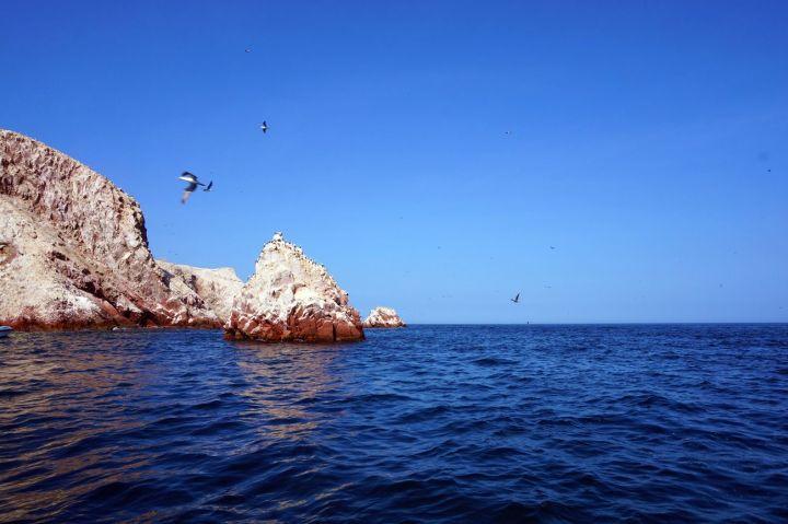 Pérou Paracas Islas Ballestas 17.JPG