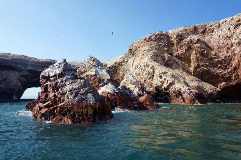 Pérou Paracas Islas Ballestas 19