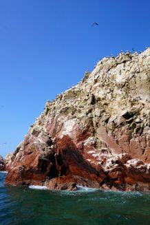 Pérou Paracas Islas Ballestas 20
