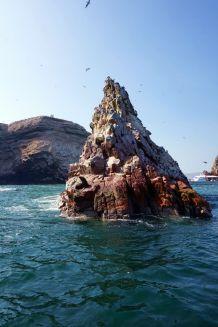 Pérou Paracas Islas Ballestas 26
