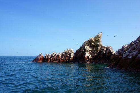 Pérou Paracas Islas Ballestas 28