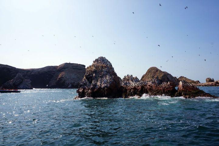 Pérou Paracas Islas Ballestas 29.JPG