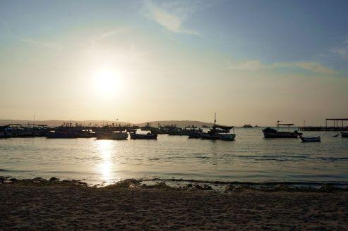 Pérou Paracas Islas Ballestas 47