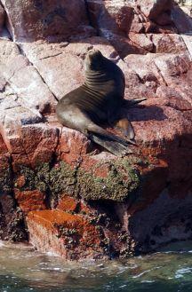 Pérou Paracas Islas Ballestas 56