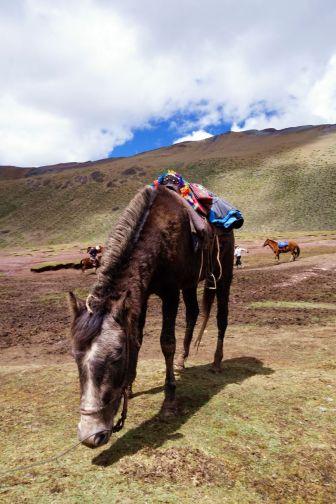 Pérou Rainbow Mountain Vinicunca 26