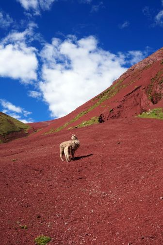 Pérou Rainbow Mountain Vinicunca 95