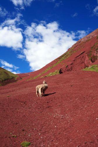 Pérou Rainbow Mountain Vinicunca 95