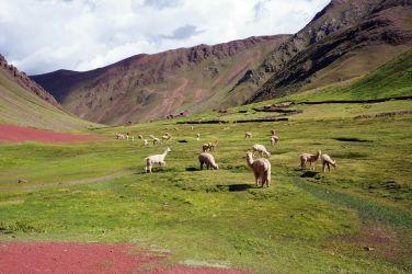 Pérou Rainbow Mountain Vinicunca 96