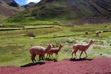 Pérou Rainbow Mountain Vinicunca 98