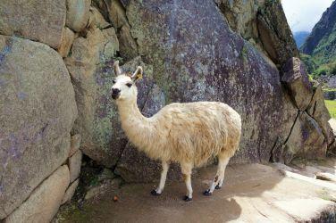 Perou Machu Picchu 12