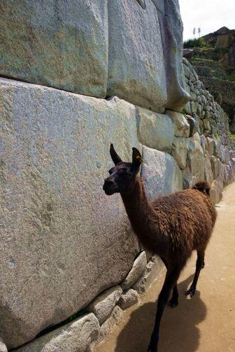 Perou Machu Picchu 13