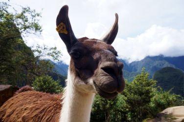 Perou Machu Picchu 18