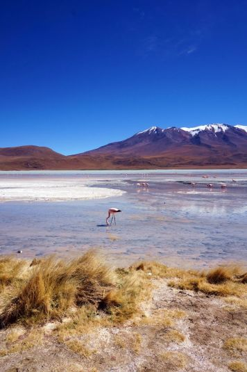 Bolivie Désert d'Uyuni 36