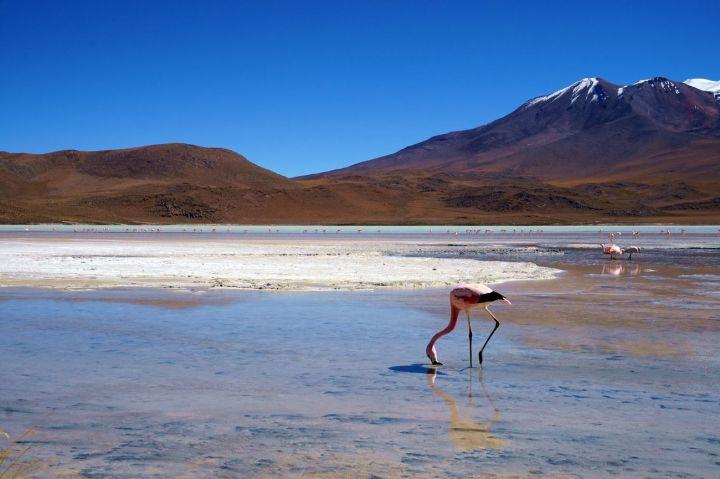 Bolivie Désert d'Uyuni 37.JPG