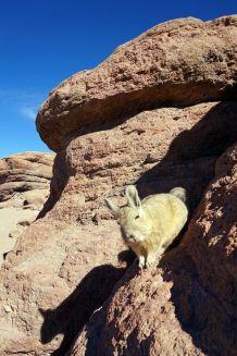 Bolivie Désert d'Uyuni 58