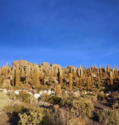 Bolivie Salar d'Uyuni 95