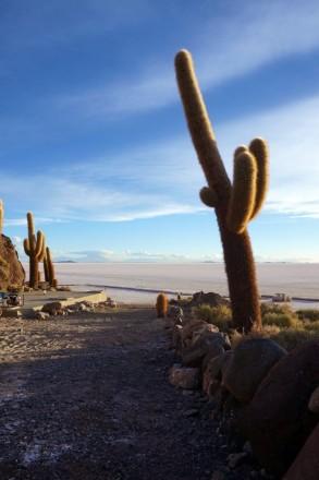 Bolivie Salar d'Uyuni 97