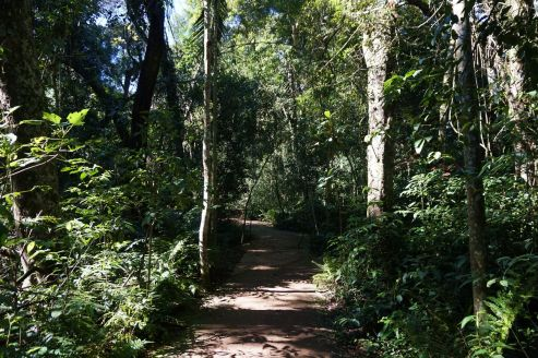 Bresil Foz do Iguacu 100