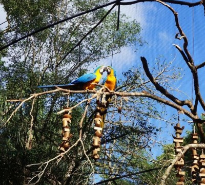 Bresil Foz do Iguacu 107