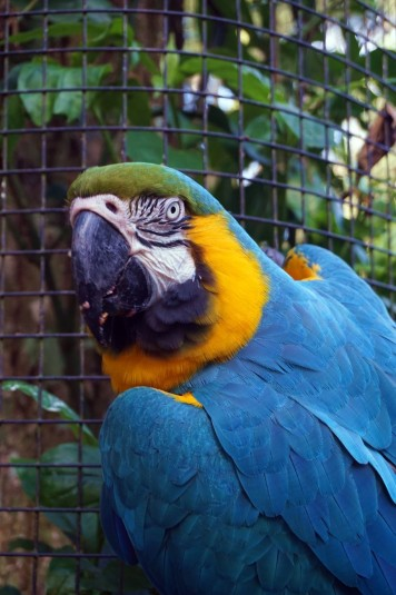 Bresil Foz do Iguacu 108