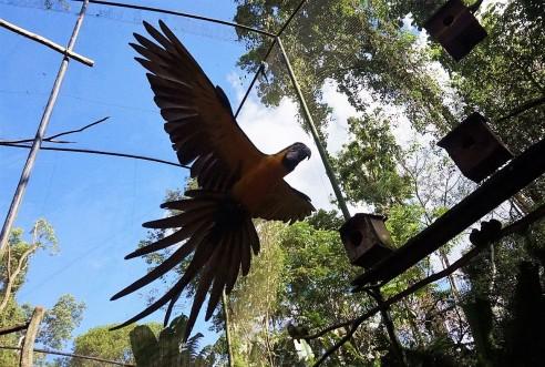 Bresil Foz do Iguacu 115