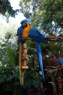 Bresil Foz do Iguacu 118