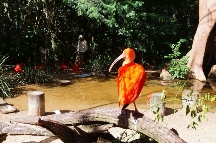 Bresil Foz do Iguacu 80