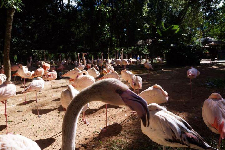 Bresil Foz do Iguacu 85