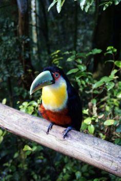 Bresil Foz do Iguacu 91