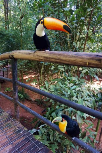 Bresil Foz do Iguacu 93