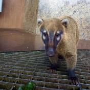 Bresil Foz do Iguacu Chutes 47