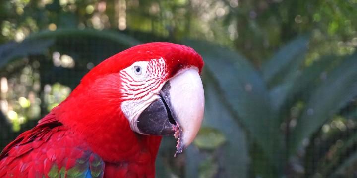 Bresil Foz do Iguacu
