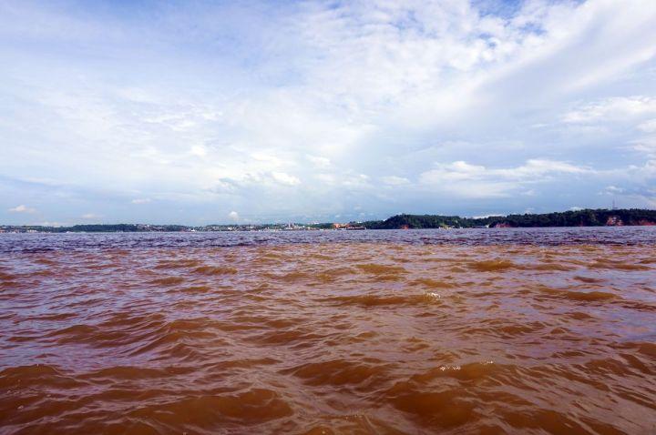 Bresil Manaus Jungle 01
