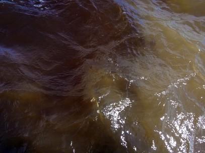 Bresil Manaus Jungle 03