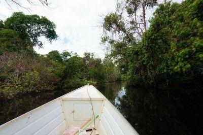 Bresil Manaus Jungle 07