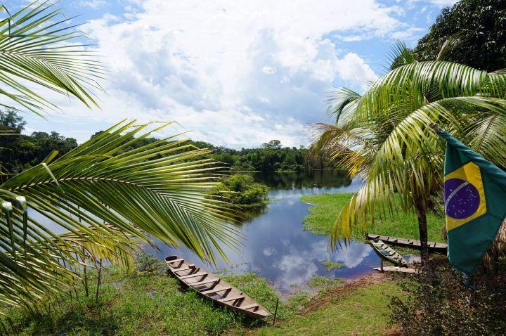 Bresil Manaus Jungle 10