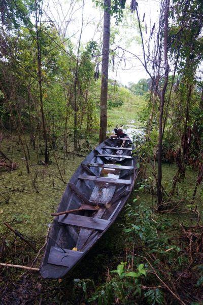 Bresil Manaus Jungle 102