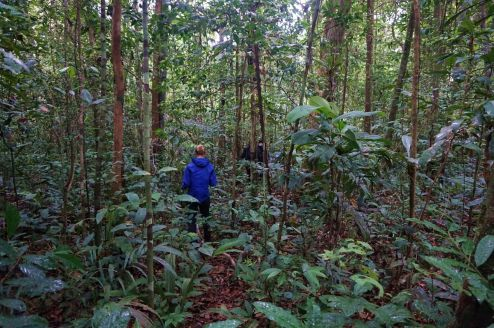Bresil Manaus Jungle 103