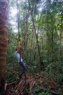 Bresil Manaus Jungle 104
