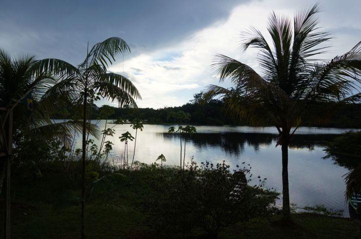 Bresil Manaus Jungle 11