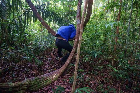 Bresil Manaus Jungle 110