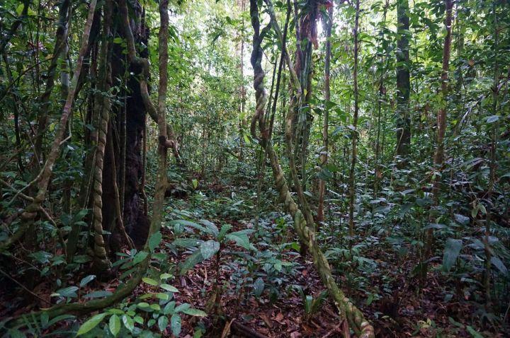 Bresil Manaus Jungle 112