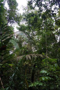 Bresil Manaus Jungle 119