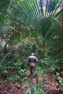 Bresil Manaus Jungle 120