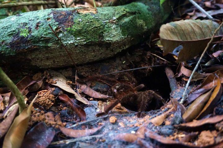 Bresil Manaus Jungle 128