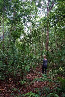 Bresil Manaus Jungle 13