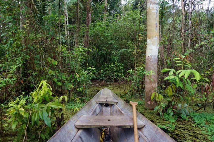 Bresil Manaus Jungle 131.JPG