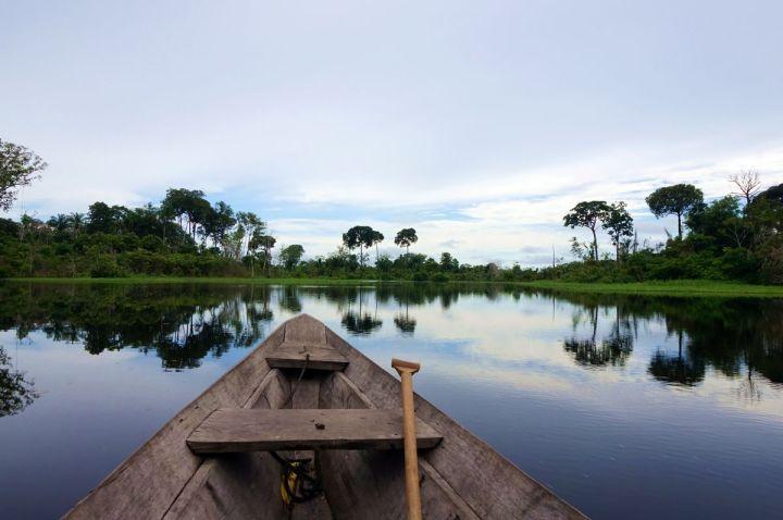 Bresil Manaus Jungle 132