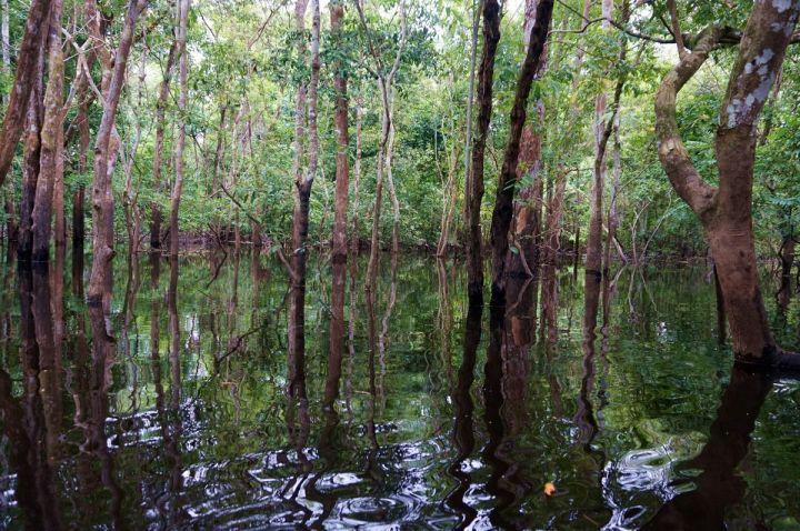Bresil Manaus Jungle 135