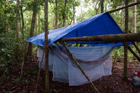 Bresil Manaus Jungle 14